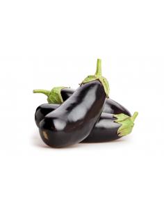 Alberginia