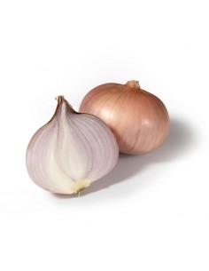 Cebolla de Figueres